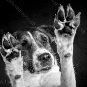 128 Dog City © Studio ITA 9270