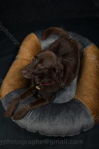 188 Dog City © Studio ITA 9961