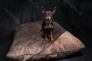 211 Dog City © Studio ITA 0182