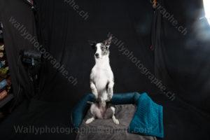219 Dog City © Studio ITA 0289