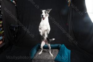 220 Dog City © Studio ITA 0292