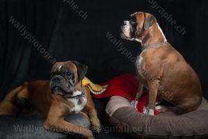 239 Dog City © Studio ITA 0462