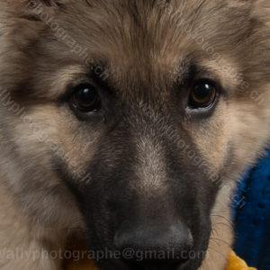 249 Dog City © Studio ITA 0534