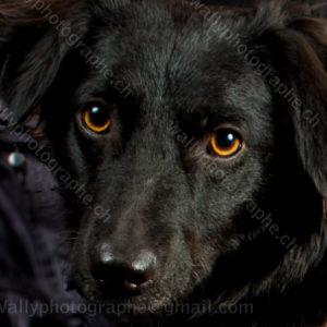 83 Dog City © StudioITA 9110